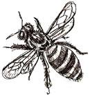 Рисунки животных - Пчела