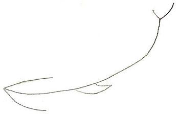 Как нарисовать кита, шаг 1