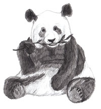 Рисунки животных - Панда