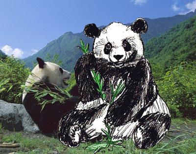 рисунки медведя красками