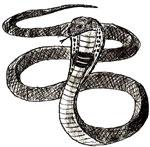 Как нарисовать змею, кобру