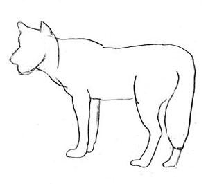 Фото воющий волк 5