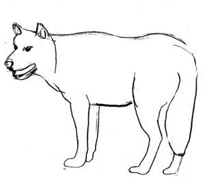 Волчий оскал рисунок