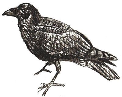 Как нарисовать ворону, шаг 6