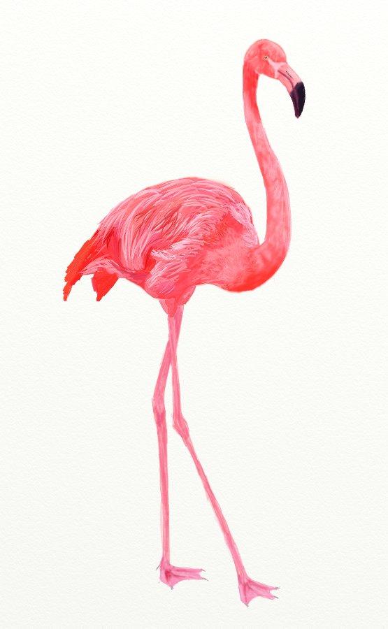 Розовый фламинго рисунки карандашом для