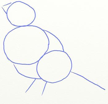Как нарисовать снегиря, шаг 2