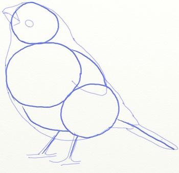 Как нарисовать снегиря, шаг 4