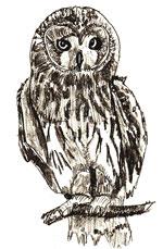 Рисунки птиц - Сова
