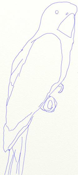 Как нарисовать попугая, шаг 3