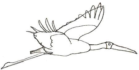 Как нарисовать аиста, шаг 4