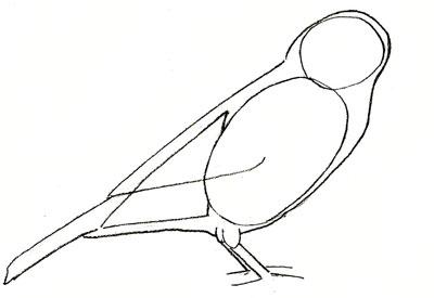 Как нарисовать воробья, шаг 3