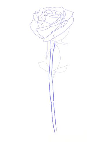 Как рисовать розу, шаг 4