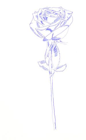 Как рисовать розу, шаг 5