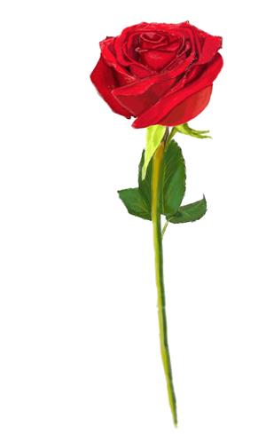 Как рисовать розу, шаг 6