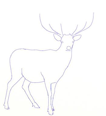 Как нарисовать оленя, шаг 3
