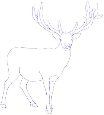 Как нарисовать оленя, шаг 4