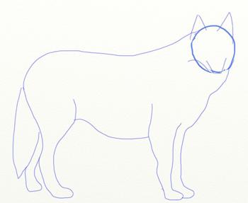 Как нарисовать волка, шаг 3