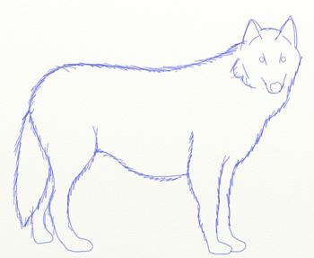 Волк рисунок для детей поэтапно