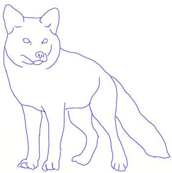 Как нарисовать лису, шаг 5