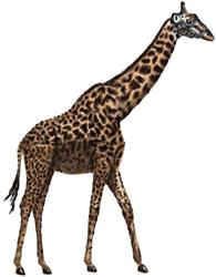 Рисунки животных - Жираф