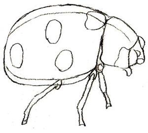 Как нарисовать божью коровку, шаг 5