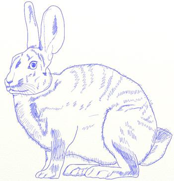 Как нарисовать зайца, шаг 6