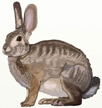 Как нарисовать зайца | Рисунок зайца поэтапано карандашом