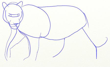 Как нарисовать тигра, шаг 3