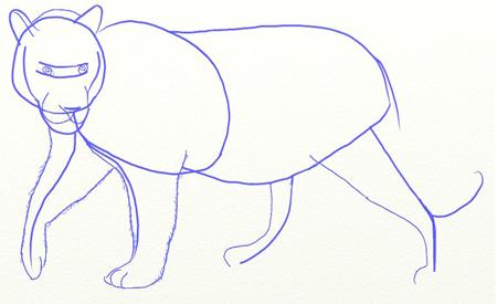 Как нарисовать тигра, шаг 4
