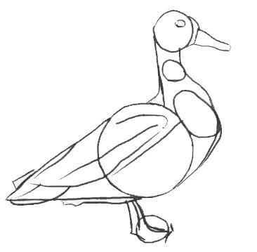 Рисунок утки на графическом планшете, шаг 4
