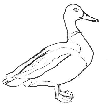 Рисунок утки на графическом планшете, шаг 5