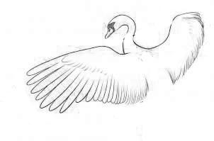 Парящие крылья птиц