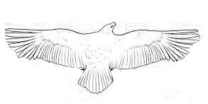 Различия формы крыльев птиц