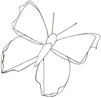 Как нарисовать контуры бабочки
