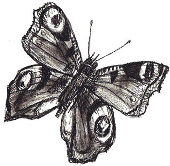 Как нарисовать бабочку, шаг 6