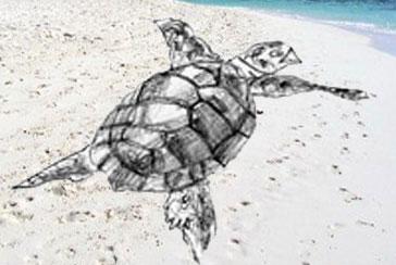 рисовать черепаху