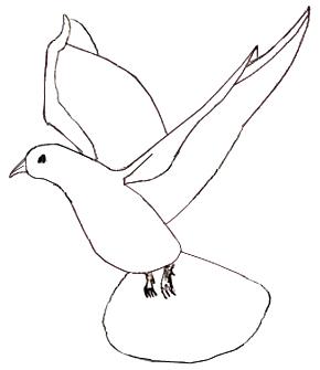 Как научиться рисовать голубя, шаг 4