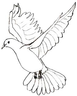 Как научиться рисовать голубя, шаг 5