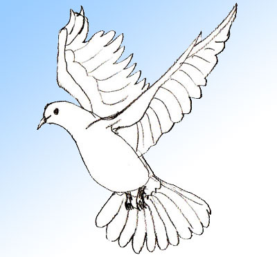 Как научиться рисовать голубя