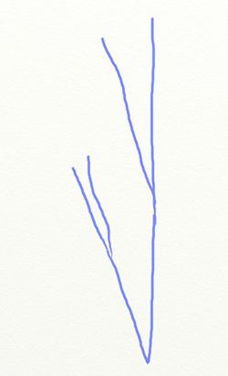 Как нарисовать березу, шаг 1