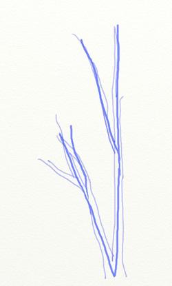 Как нарисовать березу, шаг 2