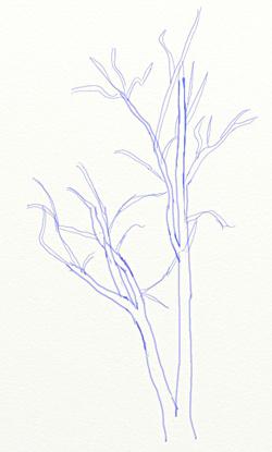 Как нарисовать березу, шаг 3
