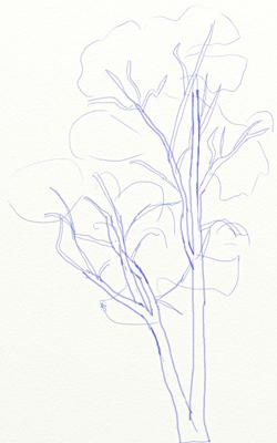 Как нарисовать березу, шаг 4