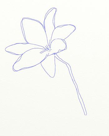 Как нарисовать лилию, шаг 4