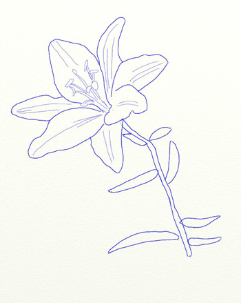 эскиз рисунка цветка белой космеи