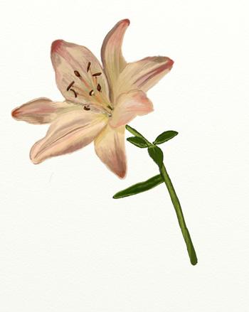 Как нарисовать лилию, шаг 7