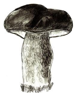 Как нарисовать грибы, шаг 5