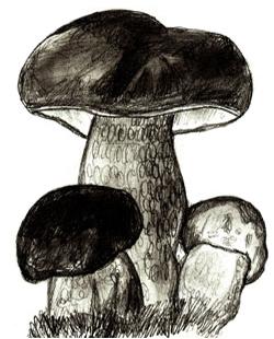 Белка с грибами рисунок