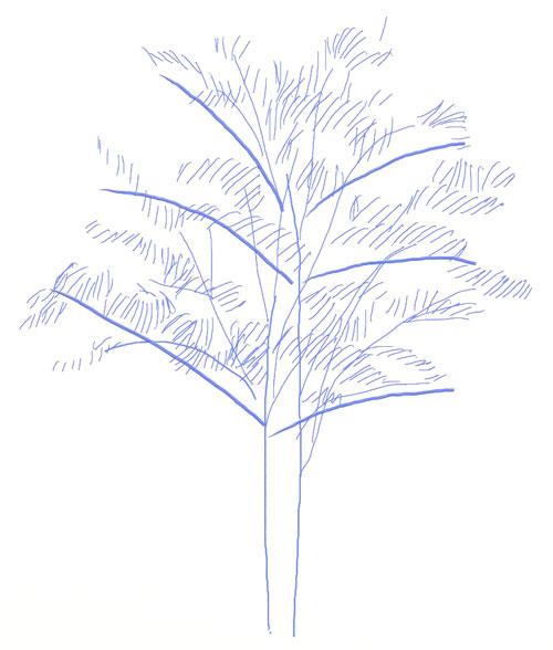 Как нарисовать дерево, шаг 4