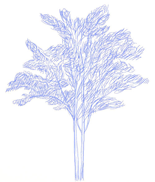 дерева карандашом лиственного веточка рисунок